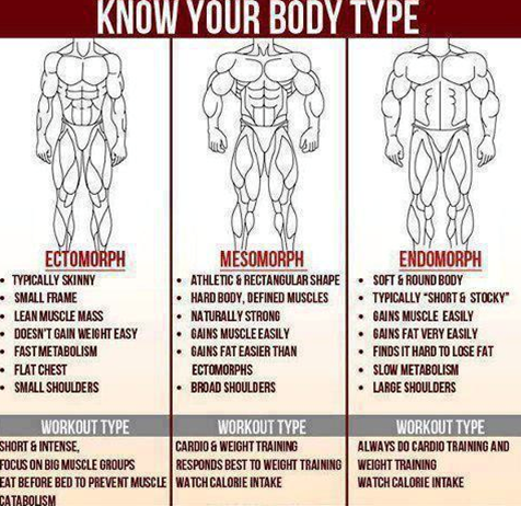 body shape picture