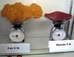 Muscle and fat