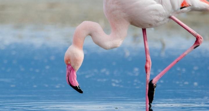 Flamingo rectangle